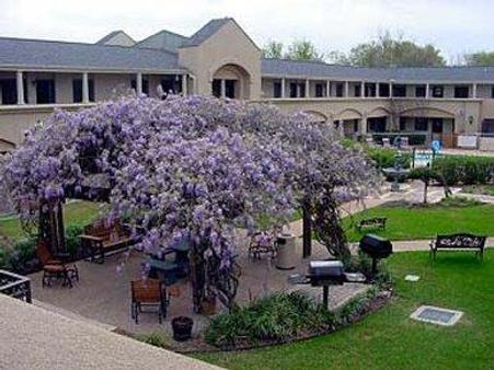 葡萄园设计型套房酒店 - 大学城 - 大厅
