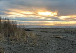 奎诺尔特甜草酒店 - Ocean Shores - 海滩